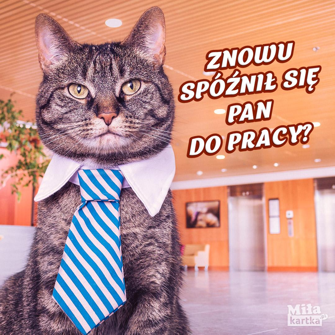 Pan Szef Kot