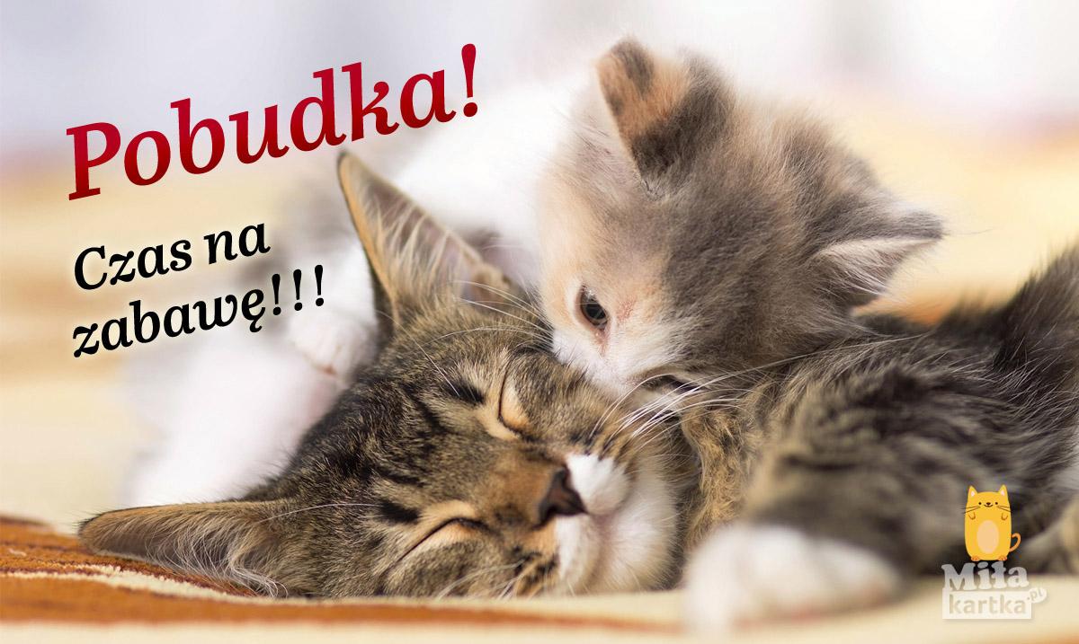 Kartka Pobudka z kotami.