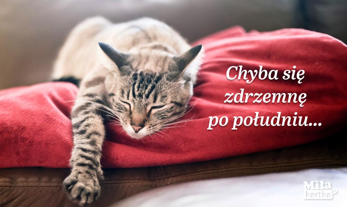 Drzemka po południu – Kotek.