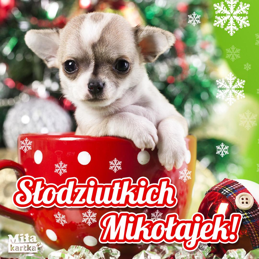Słodziutki Mikołaj