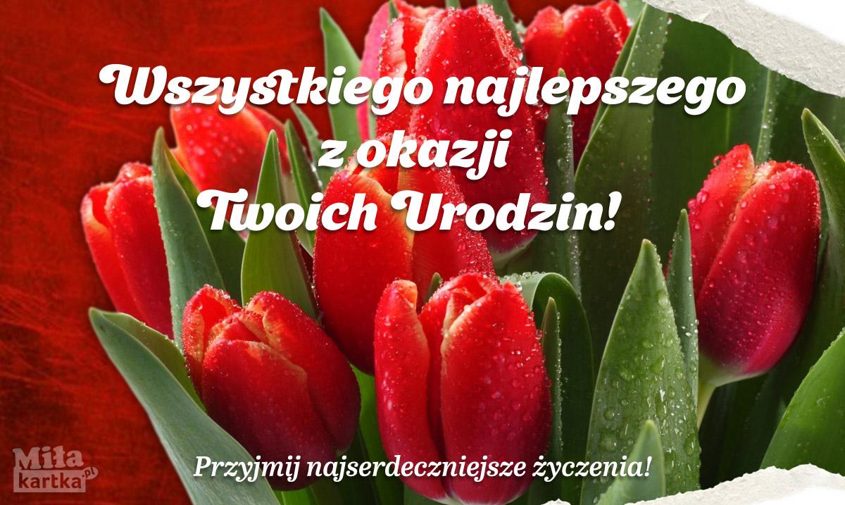 Kartka urodzinowa z tulipanami
