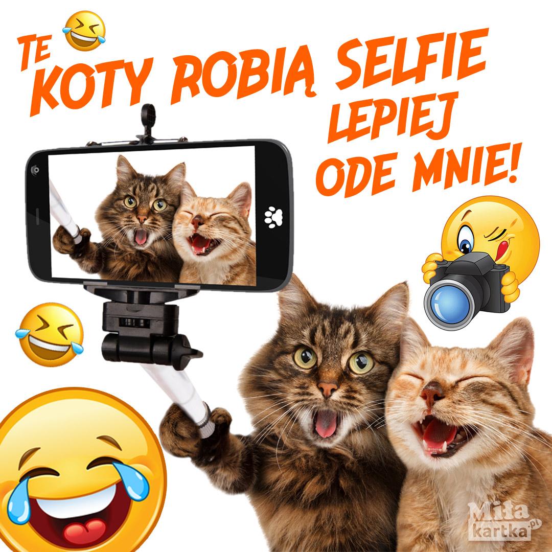 Koty i selfie