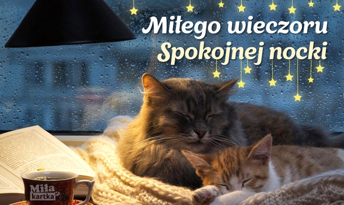 Miłego wieczoru kartka z kotkami