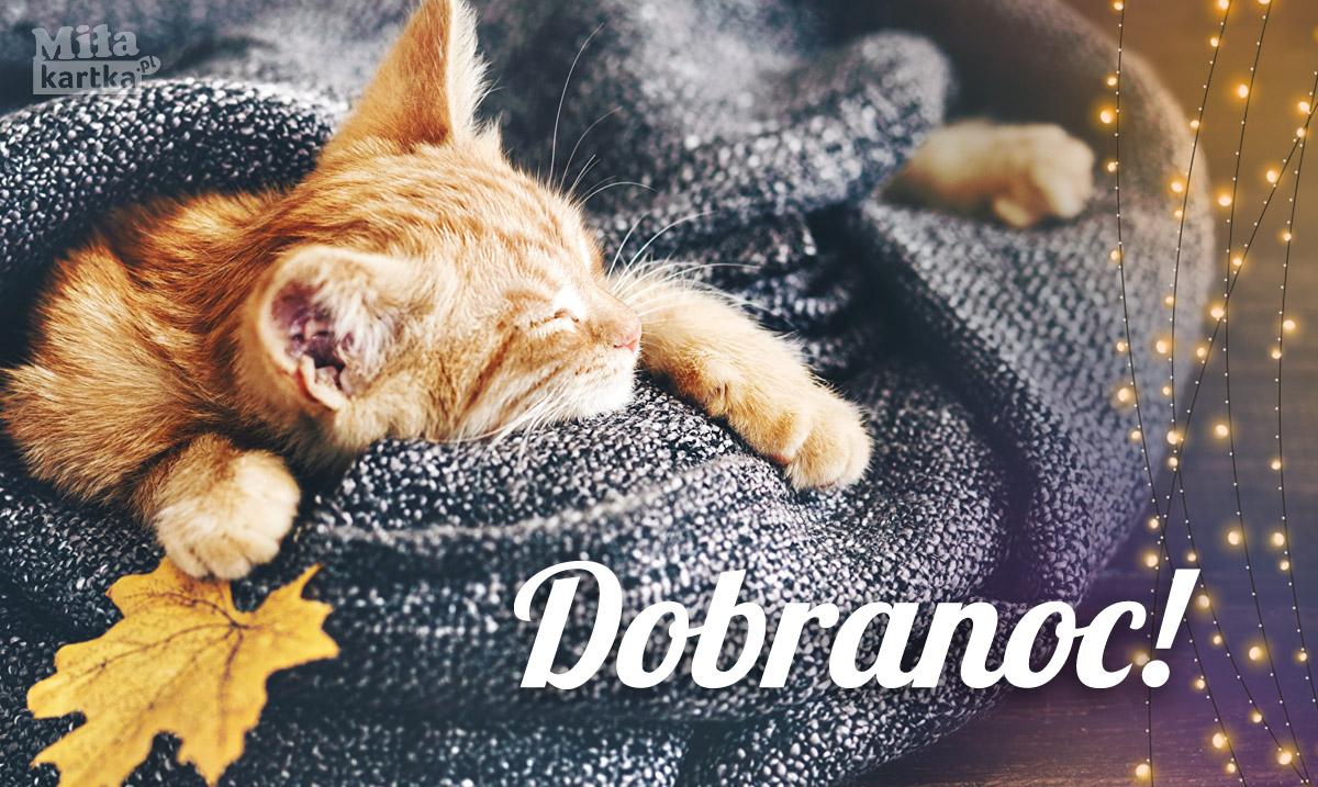 Fajny kotek na Dobranoc!